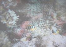 海洋珊瑚探奇3D屏摄效果