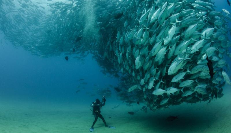 大片来袭:2013年水底世界摄影比赛揭晓
