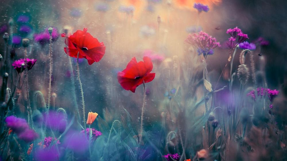 """春天里来点""""鲜花与色彩"""""""