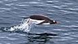 震撼心灵追梦南极-动物篇1-企鹅