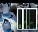 1080P高清视频测试