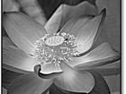 崔坚微距花卉摄影作品