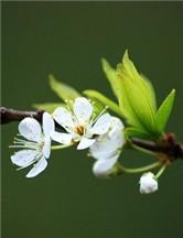 展现娇艳的魅力 解析花卉摄影构图技巧
