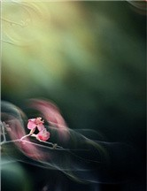 PS简单8步教你完成唯美的花卉摄影作品
