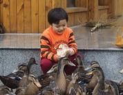 小朋友在喂鸭子