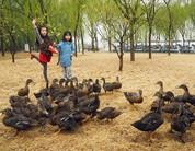 雨中漫步野鸭湖