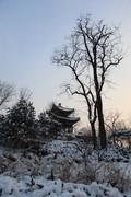 雪后玉渊潭