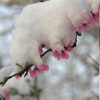 阳春白雪(单幅)为雅安加油