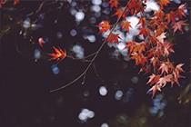 寺庙中的红叶