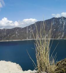 《那山,那水,那花,那草泥马》