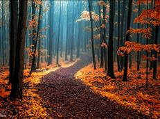 小花园拍出大森林的感觉