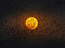 中秋:超级月亮拍摄全攻略