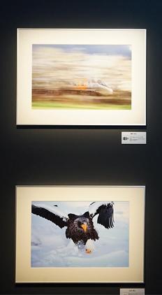 CP+2015:佳能展台影展作品精彩纷呈