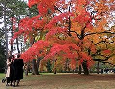 日本第三日 G9 X II行摄京都红叶