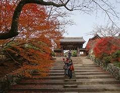 日本第四日 京都红叶红似火