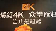 瑞鸽光电做最专业的国产4K