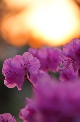 2013早春的一些花花草草