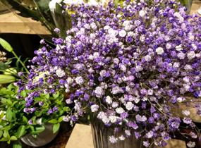《一抹蓝花》
