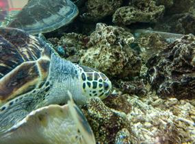 《自由海龟》