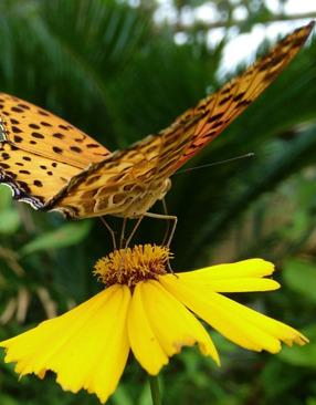 标题:美丽的蝴蝶 <br/> 型号:金立E7<br/> 作者:beauty8