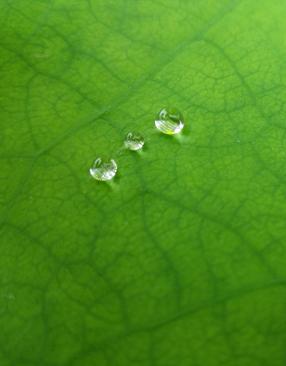 标题:雨后露珠 <br/> 型号:vivo Xshot<br/> 作者:chirenshuomeng1