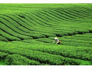 三等奖:《绿景如织》  作者:HJY715