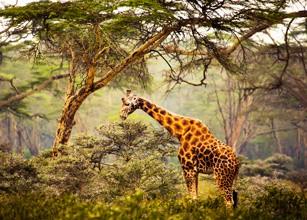 肯尼亚马塞马拉草原的野生动物们