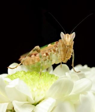 探秘两栖爬行动物的世界--蜂鸟网