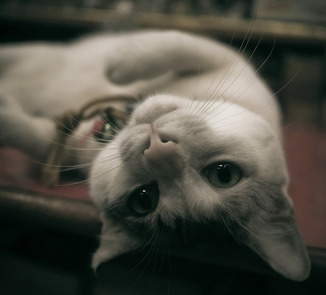 《猫的视角》