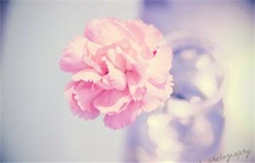 教你调出唯美花朵