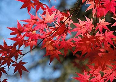 记录秋色美景 带上相机沉醉红枫古韵