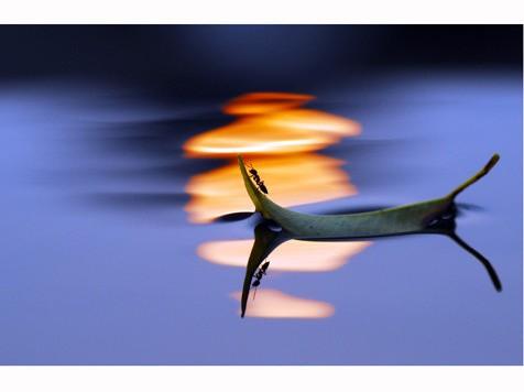 5月月赛 二等奖:《渔舟唱晚》 作者:lirenchang