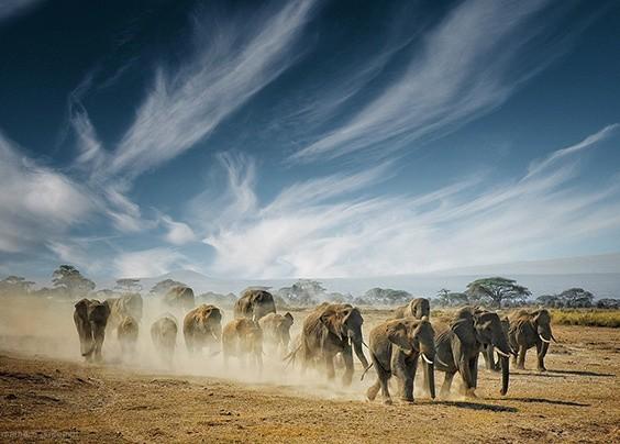 欣赏来自Mathilde Guillemot的一组野生动物摄影作品