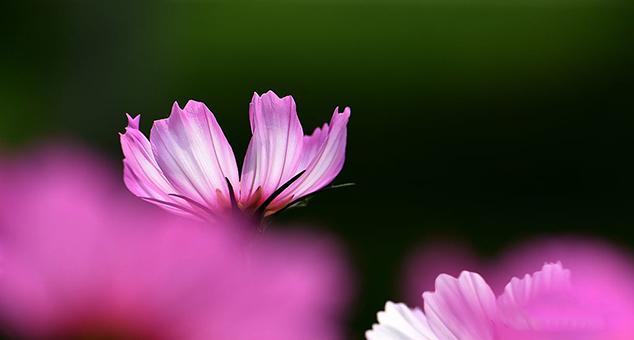 使用微距镜头拍摄花朵的精致细节